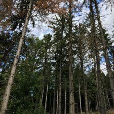 Sprichwörter zu Wald, Holz und Konsorten