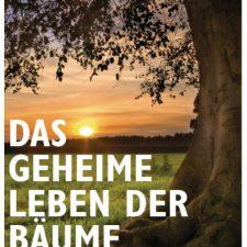 Ein Plädoyer für den deutschen Urwald