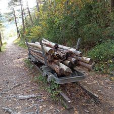 Vom Holzweg zum Erlebnispfad